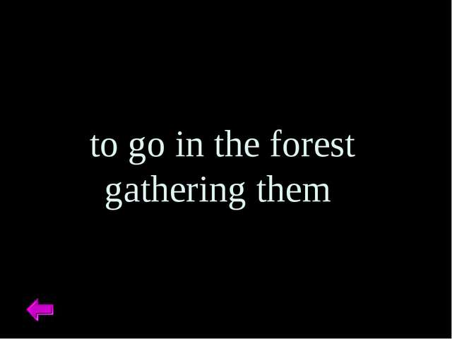 to go in the forest gathering them