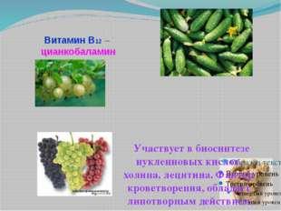 Витамин В12 – цианкобаламин Участвует в биосинтезе нуклеиновых кислот, холина