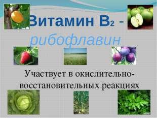 Витамин В2 - рибофлавин Участвует в окислительно-восстановительных реакциях