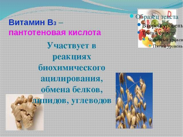Витамин В3 – пантотеновая кислота Участвует в реакциях биохимического ацилиро...