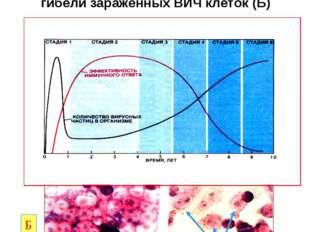 Диаграмма развития СПИДА и эффективности иммунного ответа организма (А) и мик