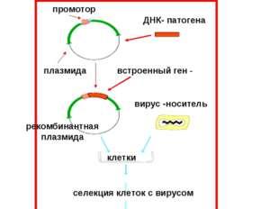 Самыми перспективным направлением борьбы с ВИЧ является разработка ДНК - вакц