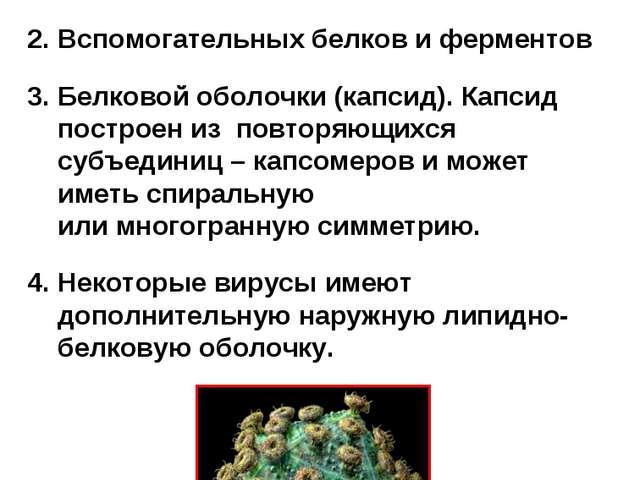 Все вирусы имеют принципиально сходное строение - они состоят из: Нуклеиновой...