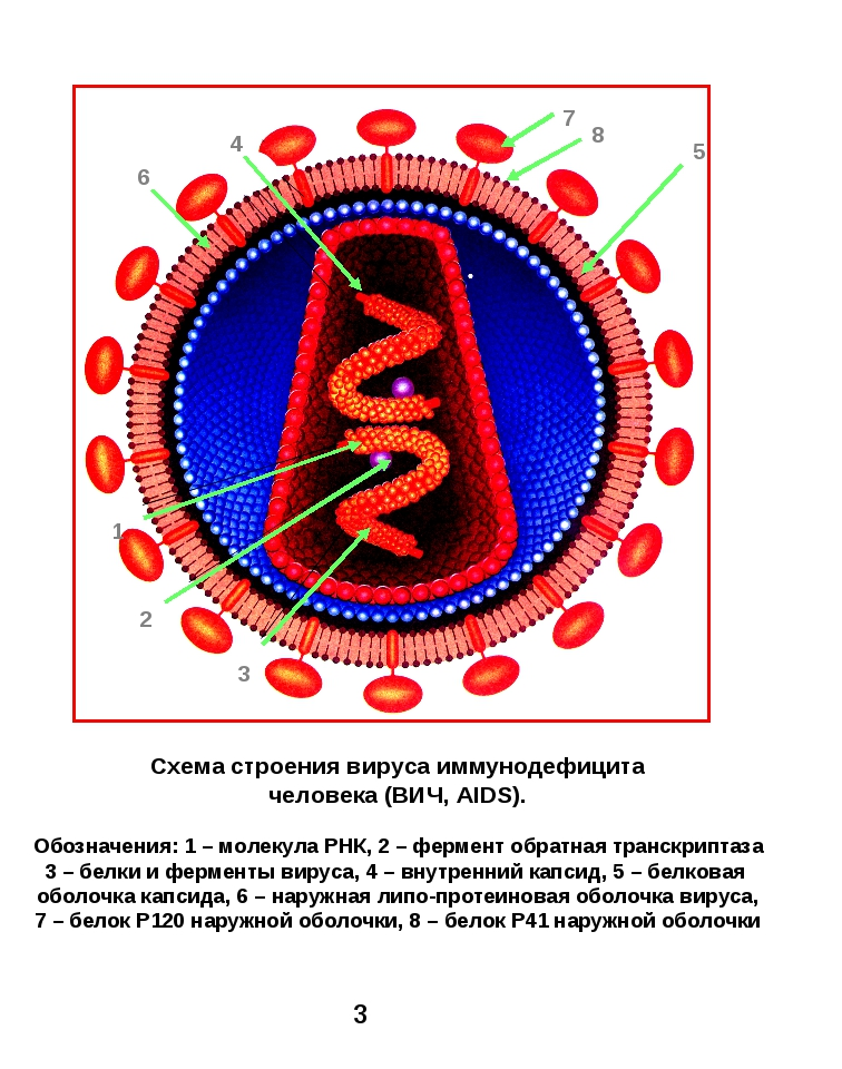 1 4 5 6 Схема строения вируса иммунодефицита человека (ВИЧ, AIDS). Обозначени...