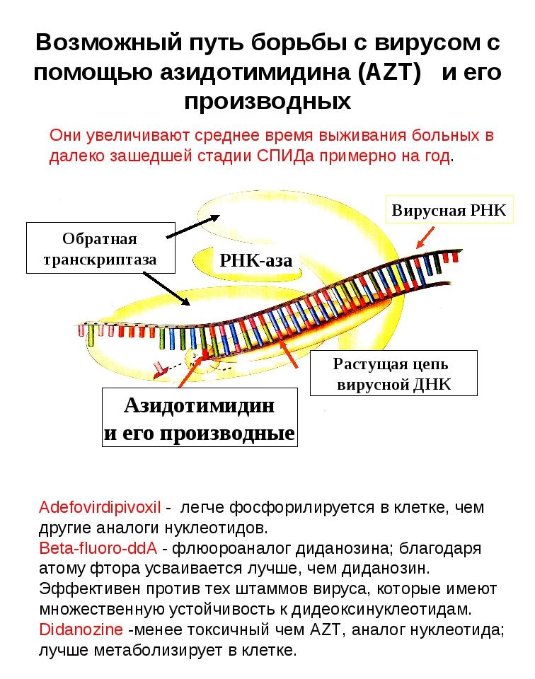 Возможный путь борьбы с вирусом с помощью азидотимидина (AZT) и его производн...
