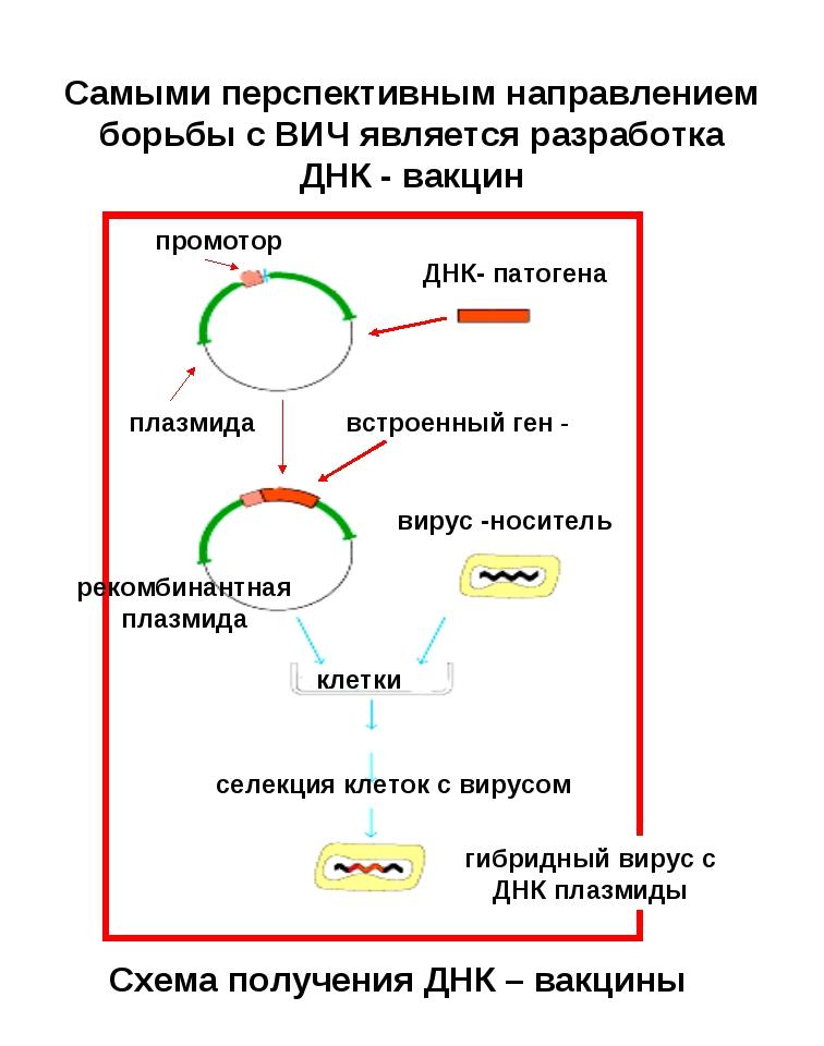 Самыми перспективным направлением борьбы с ВИЧ является разработка ДНК - вакц...