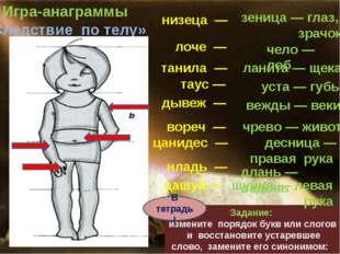 лоче — танила — Игра-анаграммы «Следствие по телу» Задание: измените порядок