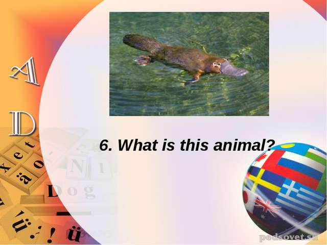 6. What is this animal?