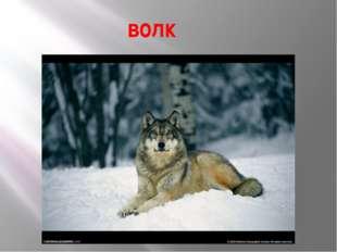 волк Какие слова спрятаны в назнаниях этих предметов?
