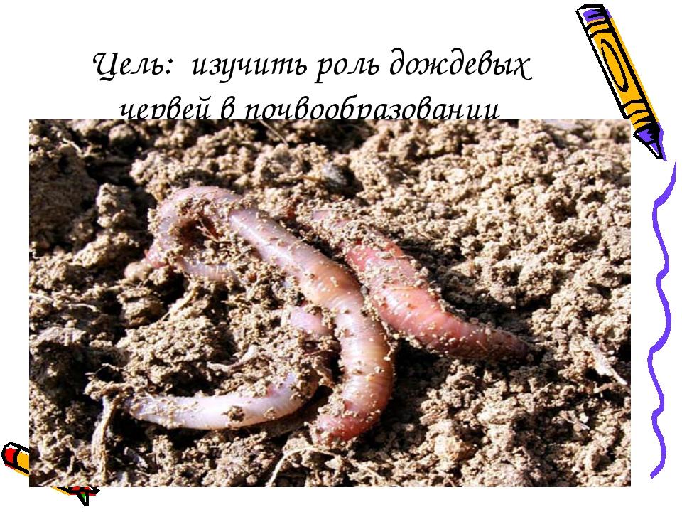 Цель: изучить роль дождевых червей в почвообразовании