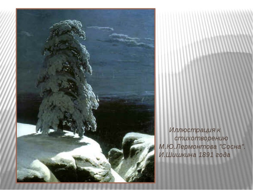 """Иллюстрация к стихотворению М.Ю.Лермонтова """"Сосна"""". И.Шишкина 1891 года"""