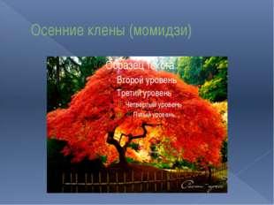 Осенние клены (момидзи)