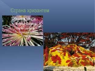Страна хризантем