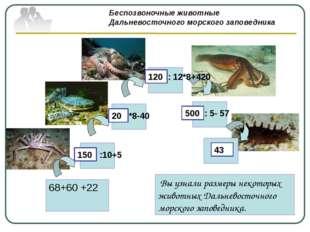 : 12*8+420 : 5- 57 Беспозвоночные животные Дальневосточного морского заповед