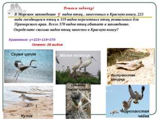 В Морском заповеднике у видов птиц , занесенных в Красную книгу, 223 вида гне
