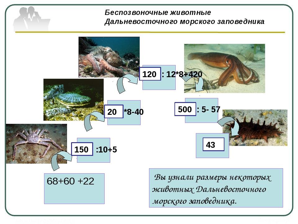 : 12*8+420 : 5- 57 Беспозвоночные животные Дальневосточного морского заповед...