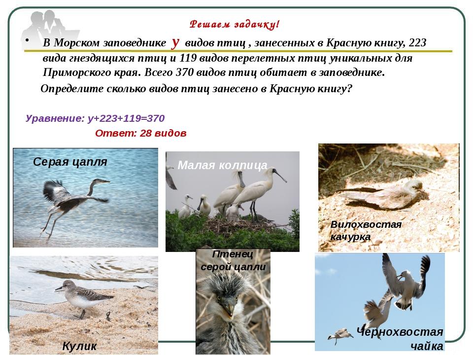 В Морском заповеднике у видов птиц , занесенных в Красную книгу, 223 вида гне...