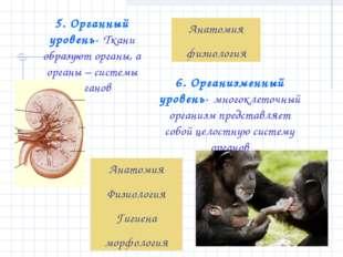 5. Органный уровень- Ткани образуют органы, а органы – системы органов Анатом