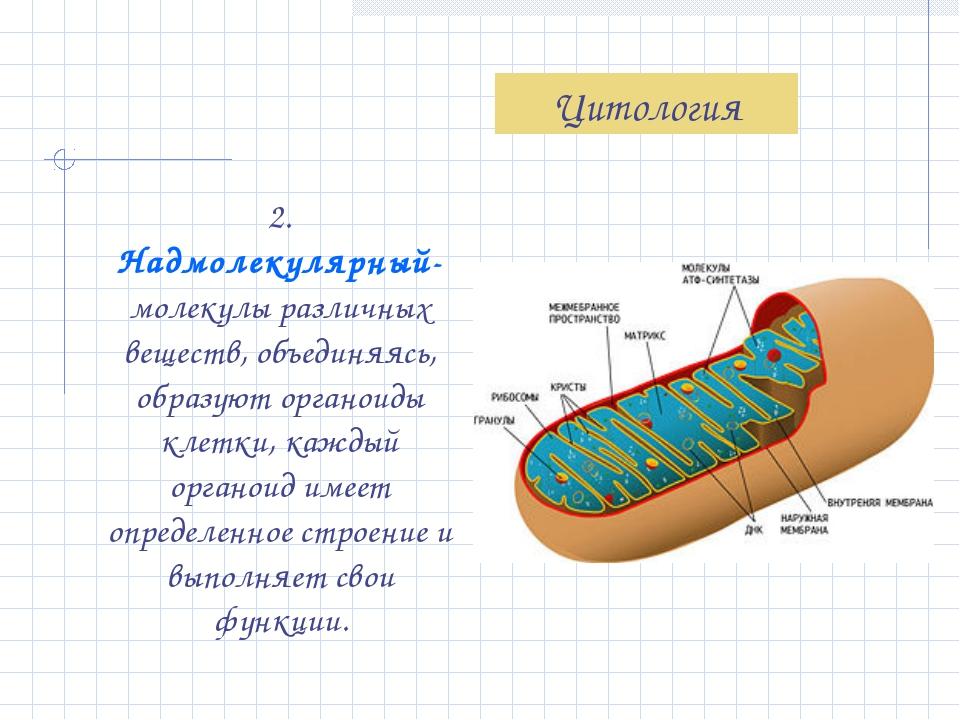 2. Надмолекулярный- молекулы различных веществ, объединяясь, образуют органои...
