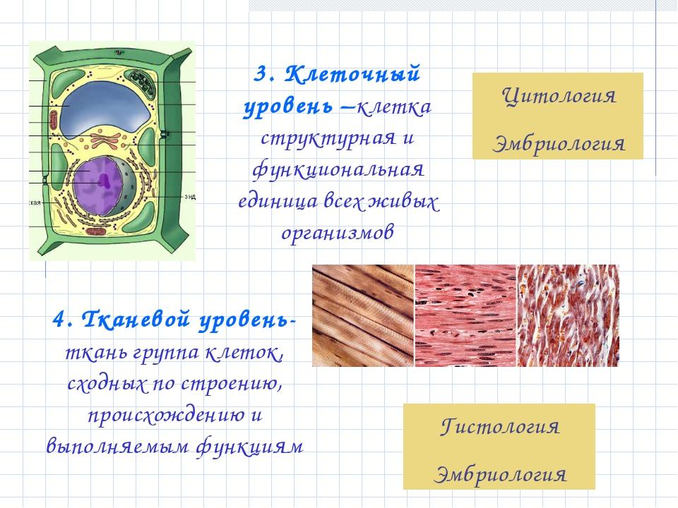 3. Клеточный уровень –клетка структурная и функциональная единица всех живых...