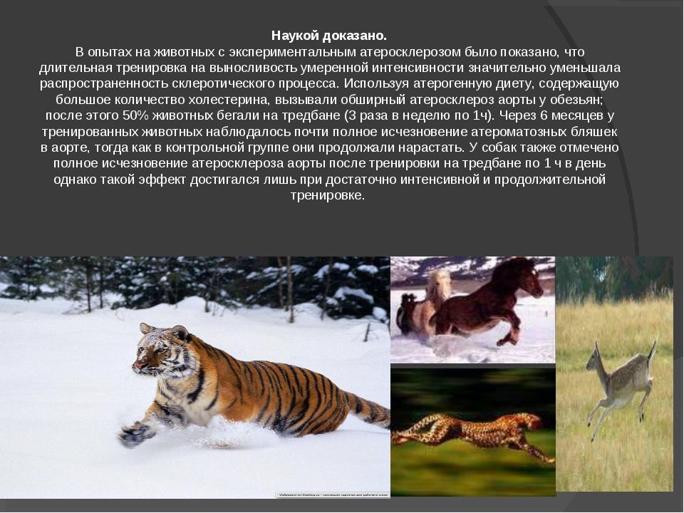 Наукой доказано. В опытах на животных с экспериментальным атеросклерозом было...