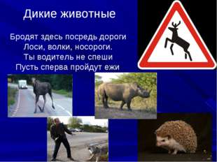 Дикие животные Бродят здесь посредь дороги Лоси, волки, носороги. Ты водитель