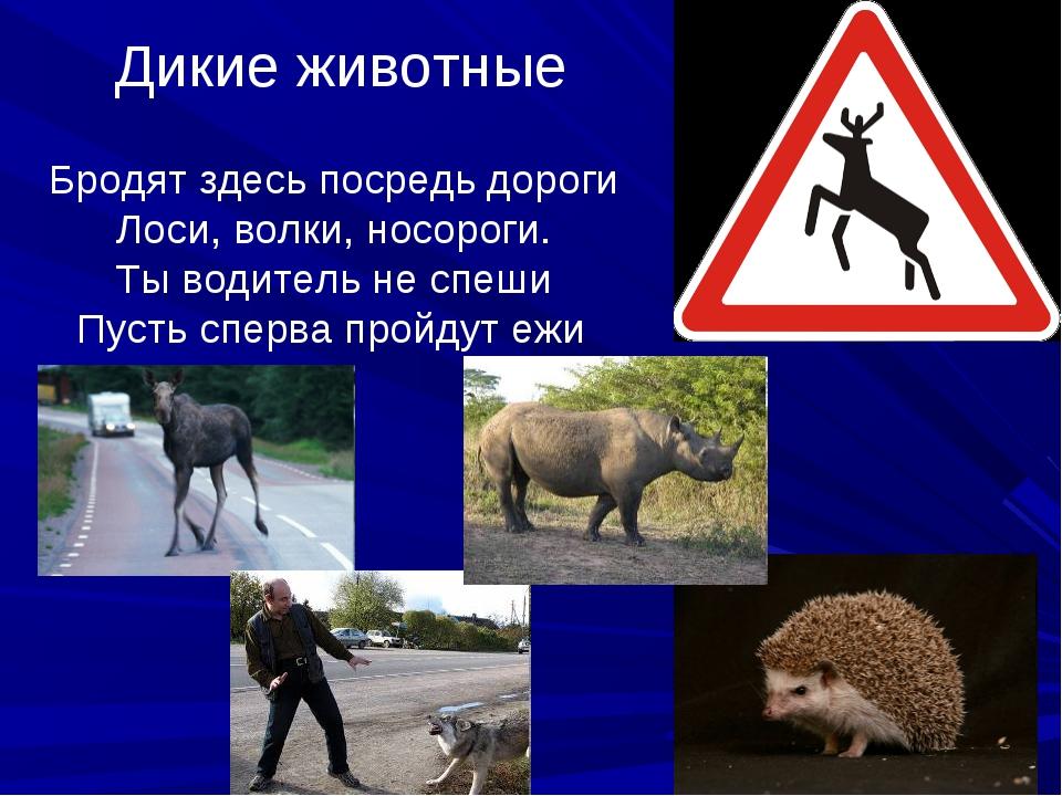 Дикие животные Бродят здесь посредь дороги Лоси, волки, носороги. Ты водитель...