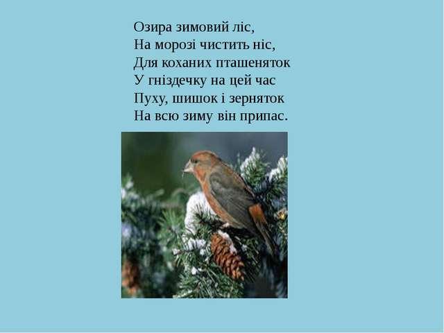 Озира зимовий ліс, На морозі чистить ніс, Для коханих пташеняток У гніздечку...