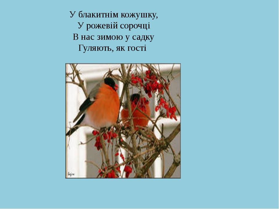 У блакитнім кожушку, У рожевій сорочці В нас зимою у садку Гуляють, як гості