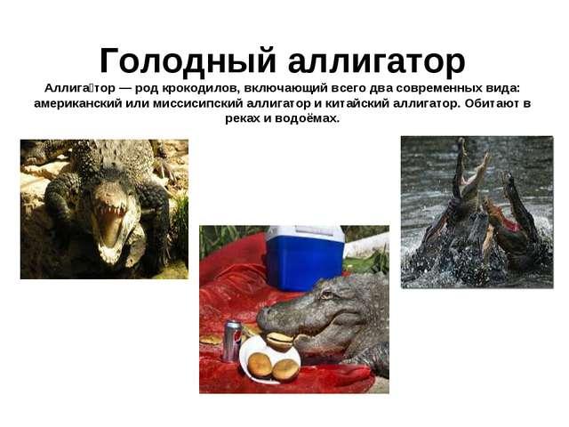 Голодный аллигатор Аллига́тор — род крокодилов, включающий всего два совреме...