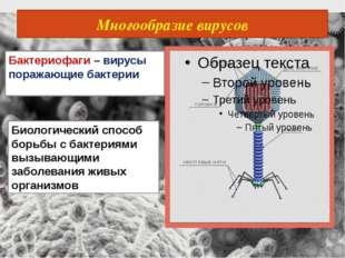 Многообразие вирусов Бактериофаги – вирусы поражающие бактерии Биологический