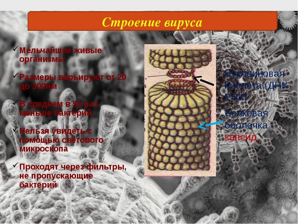 Строение вируса Мельчайшие живые организмы Размеры варьируют от 20 до 300нм В...