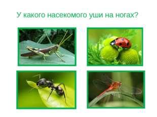 У какого насекомого уши на ногах?