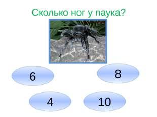 Сколько ног у паука? 6 4 10 8