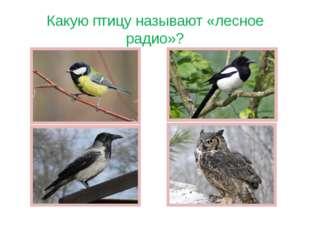 Какую птицу называют «лесное радио»?