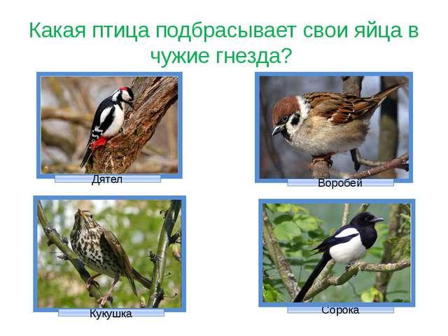 Какая птица подбрасывает свои яйца в чужие гнезда? Кукушка Дятел Сорока Воробей