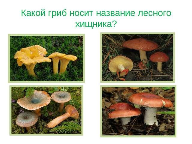 Какой гриб носит название лесного хищника?