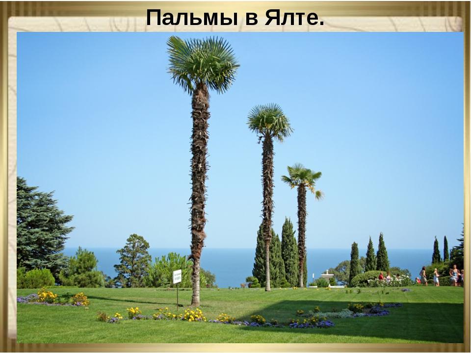 Пальмы в Ялте.