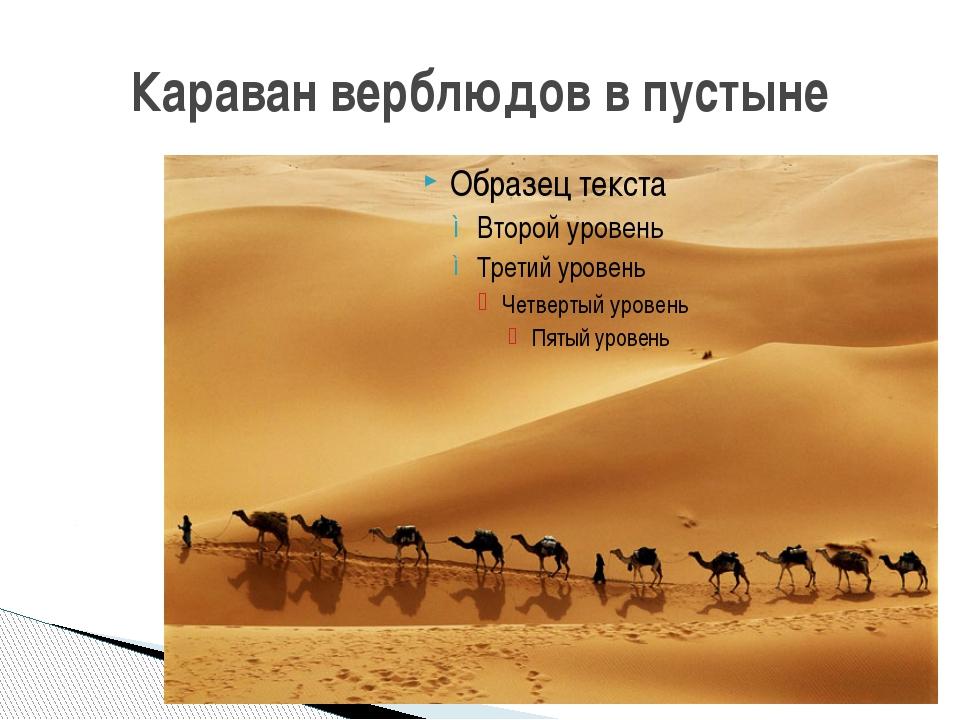 Караван верблюдов в пустыне