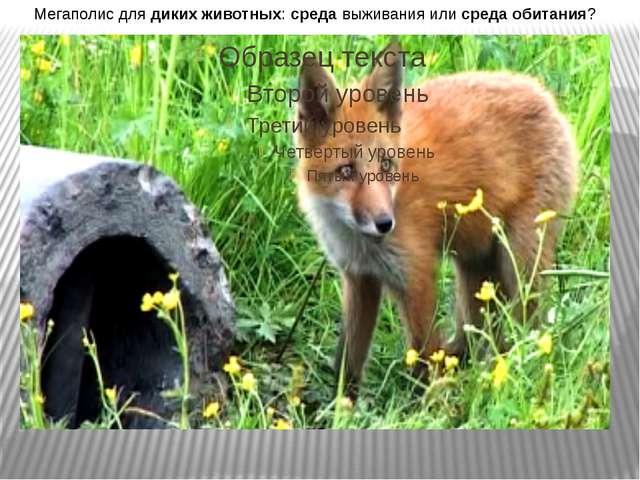Мегаполис для диких животных: среда выживания или среда обитания?
