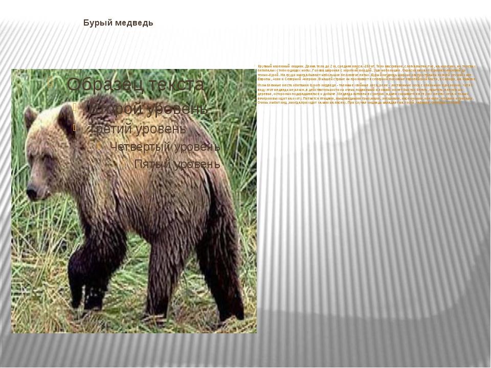 Бурый медведь Крупный наземный хищник. Длина тела до 2 м, средняя масса -150...