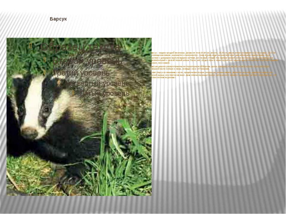 Барсук Барсук - хищник средней величины. Длина его тела 60-80 см, хвоста - 1...