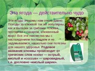 Эта ягода— действительно чудо Эти ягоды знакомы нам очень давно. Походы за к