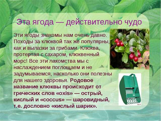 Эта ягода— действительно чудо Эти ягоды знакомы нам очень давно. Походы за к...