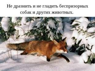 Не дразнить и не гладить беспризорных собак и других животных.