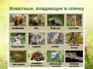 Животные, впадающие в спячку