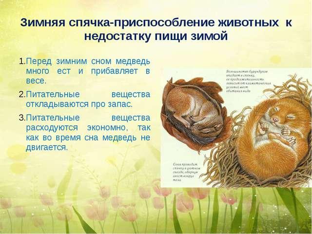 Зимняя спячка-приспособление животных к недостатку пищи зимой Перед зимним сн...