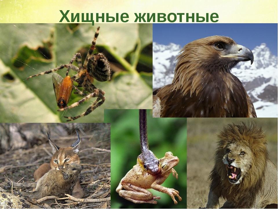 Хищные животные