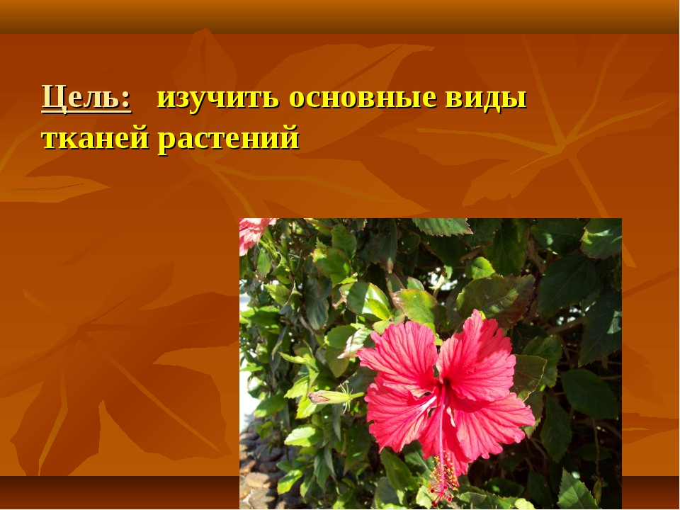 Цель: изучить основные виды тканей растений