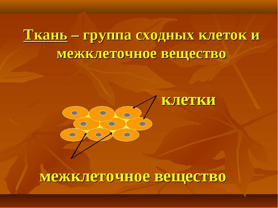 Ткань – группа сходных клеток и межклеточное вещество межклеточное вещество к...